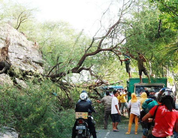 Rawan Pohon Tumbang