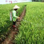 PPL Pertanian Bandung Barat - bandung ekspres