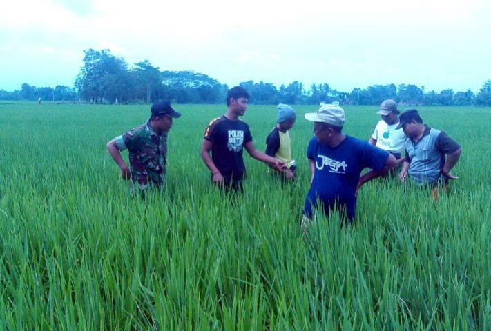 kurang penyuluh pertanian - bandung ekspres