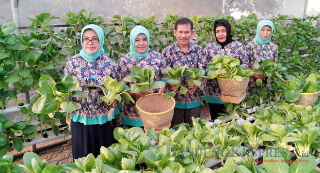 Sayuran Hidroponik Peluang Bisnis Ramah Lingkungan Jabar