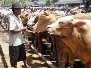 Stok Hewan Kurban yang didatangkan dari Jawa Tengah dan Jawa Timur