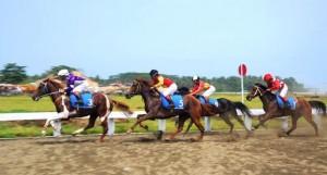 Ratusan Kuda Bertanding