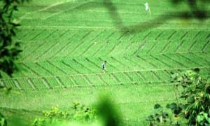 ILUSTRASI DESA ASRI: Kawasan persawahan di Kampung Cidadap, Desa Padalarang, Kecamatan Padalarang, Kabupaten Bandung Barat.