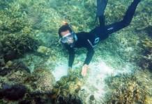 konservasi taman laut kima