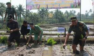 TNI Dampingi Petani