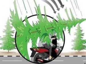 Tidak Bisa Menghindari Maut    -Korban Leni Novita Sari dibonceng kakaknya Agus Riyanto menggunakan sepeda motor nopol D 5177 WN   -Di lokasi kejadian, korban bersama pengendara lainnya terjebak kemacetan    -Tidak lama berselang, satu pohon pinus tumbang   -Korban tidak bisa menghindar karena arus padat   -Selain menimpa kedua korban, pohon tersebut menimpa dua mobil: Terios nomor polisi E 1808 KFL dan Avanza B 1464 HL  Sumber: diolah dari wawancara