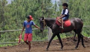 wisata_kuda_megastar