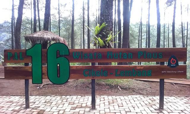 Menikmati Kesejukan Wisata Hutan Pinus Pal 16 Cikole Jabar