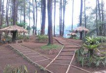 Wisata Hutan Pinus Cikole Lembang PAL 16 (3)