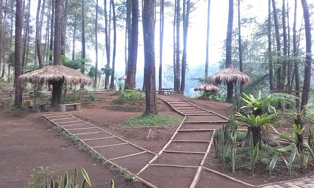 Hasil gambar untuk Hutan Pinus Cikole