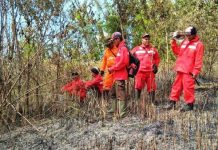 kebakaran-hutan-BKSDA