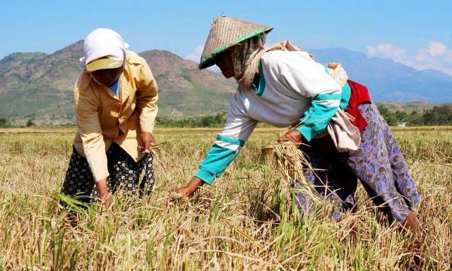 asuransi petani