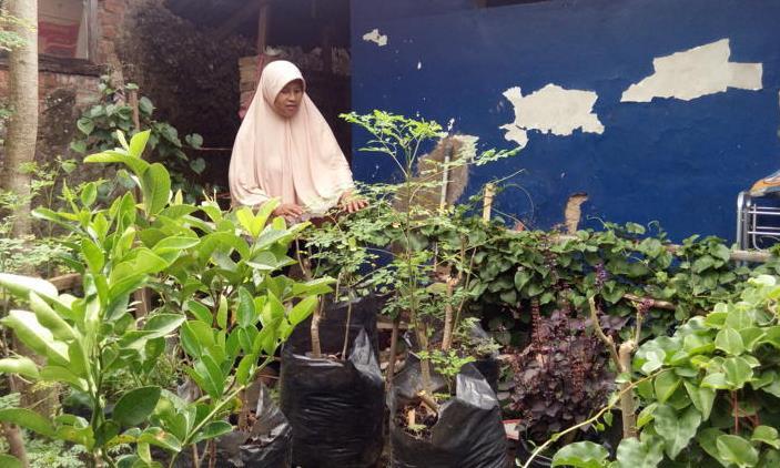 kampung herbal