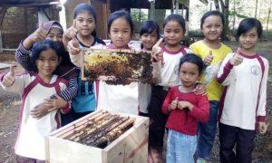 budidaya lebah madu kampung cieter