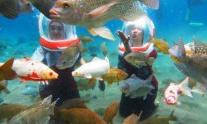 wisata underwater