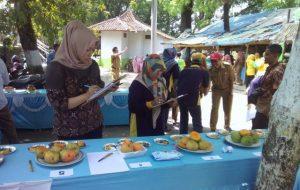 Melihat Kegiatan Kontes Mangga Gedong Gincu di Kecamatan Tomo