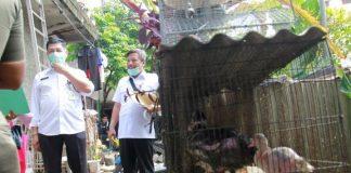 ANCAMAN VIRUS: Pemkab Bandung Barat mengingatkan kepada para peternak unggas untuk mewaspadai penyebaran virus avian influenza yang menyebabkan penyakit flu burung. Salah satunya dengan menjaga kesehatan hewan dan kebersihan tempat.