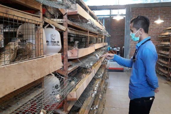 Wisata Burung Puyuh Berikan Edukasi