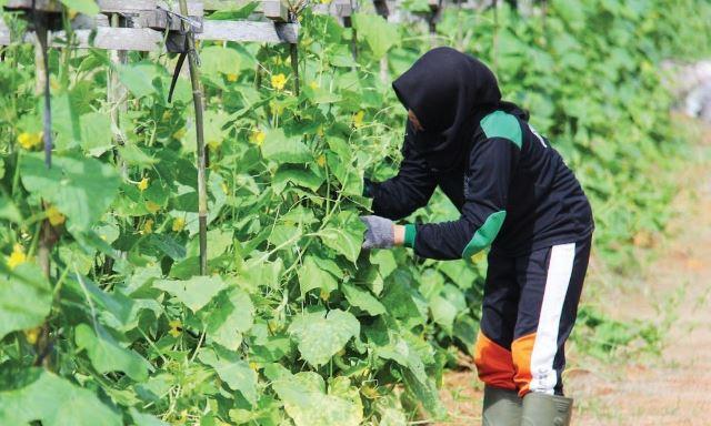 Produksi Pertanian Lokal Harus Berani Bersaing Jabar Ekspres Online