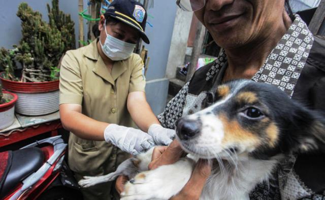 vaksin hewan
