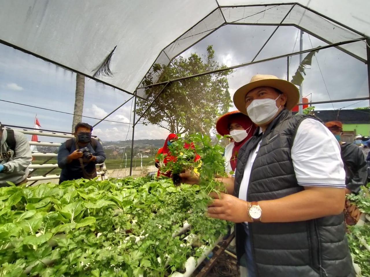 Program Buruan Sae dengan menanam sayuran di lahan tidur untuk meningkatkan kebutuhan keluarga