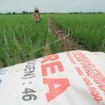 Petani menebar pupuk di areal sawah desa Brondong, Kecamatan Pasekan, Indramayu, Jawa Barat. (ANTARA FOTO/Dedhez Anggara)