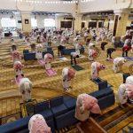 Dalam file foto yang diambil pada 31 Mei 2020 ini, jamaah Muslim Saudi mengamati jarak aman saat mereka melakukan salat Zuhur di masjid Al-Rajhi di ibu kota Riyadh. foto berkas AFP
