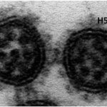 Virus Covid-19 Varian Delta yang ditemukan di India