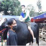 Rafi Ahmad menunggangi Sapi untuk Hewan Kurban dengan bobo 1.4 ton