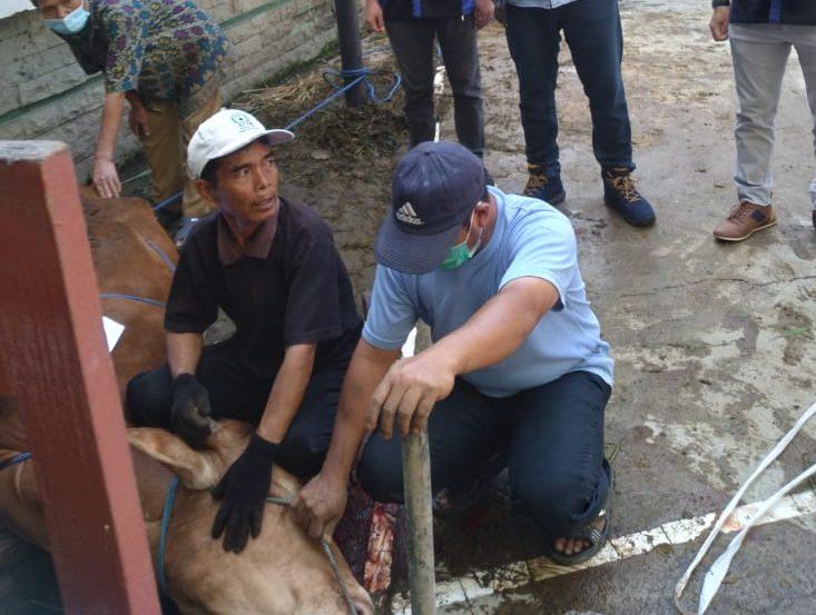DPW GP Partai NasDem melaksanakan program pemotongan hewan kurban.
