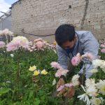 Petani bunga di Lembang, KBB, merugi akibat PPKM Darurat dan level 4.