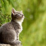 Kucing (Foto: pixabay)