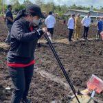Ketua DPR RI Puan Maharani menanam jagung di Kelurahan Klamesen, Distrik Mariat, Kabupaten Sorong, Senin (4/10/2021). ANTARA/HO-Humas DPR RI